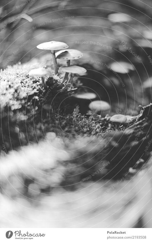#AS# Lichtung der Pilze Umwelt Natur Pflanze ästhetisch Wachstum Waldlichtung Unschärfe Waldboden Wegrand Pilzhut Pilzsucher Pilzkopf Giftpilz Schwarzweißfoto