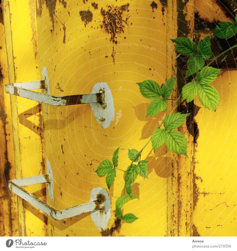 Sprossen weiß grün Pflanze gelb Leben Wand Mauer Metall frisch Wachstum Wandel & Veränderung Verfall Rost positiv Container Trieb