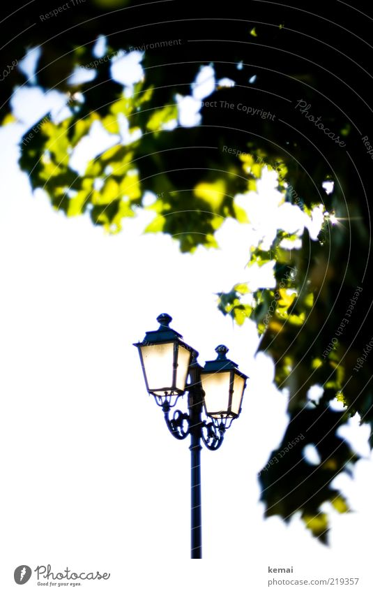 Licht und Leuchten Umwelt Natur Pflanze Himmel Sonne Sonnenlicht Sommer Schönes Wetter Baum Lampe Laterne leuchten alt ästhetisch elegant hell grün Farbfoto