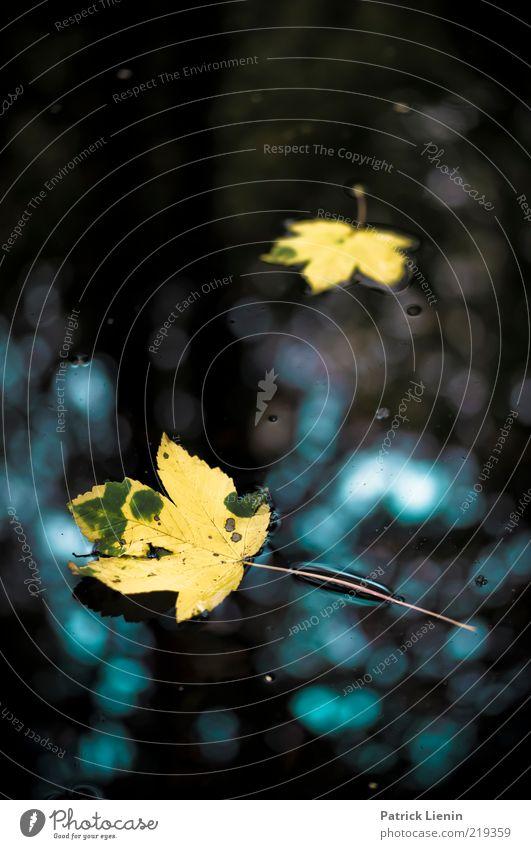 Beautiful ground Umwelt Natur Pflanze Urelemente Wasser Herbst Wetter Schönes Wetter Blatt Teich See leuchten ästhetisch Flüssigkeit hell schön nass Stimmung