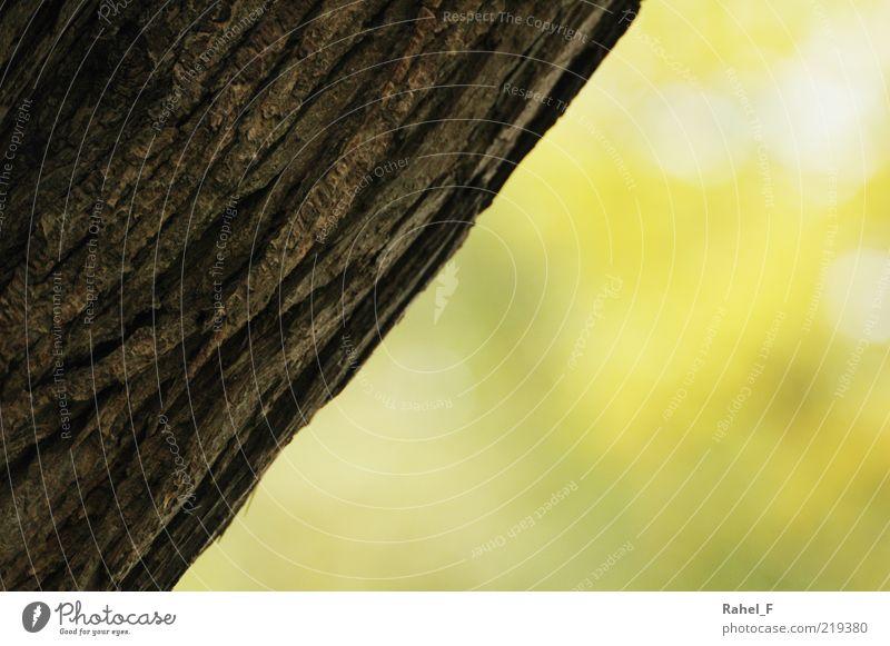 ... wohin gehts weiter? Natur Baum ruhig gelb braun frisch Wachstum einfach diagonal positiv Anschnitt Baumrinde Bildausschnitt
