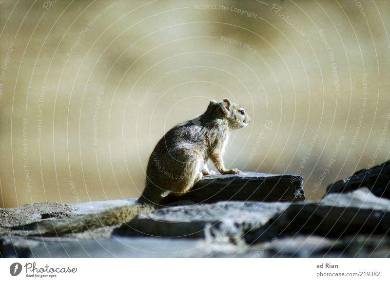 gute Aussichten Natur Tier beobachten Wildtier niedlich Wachsamkeit achtsam Nagetiere Nahrungssuche