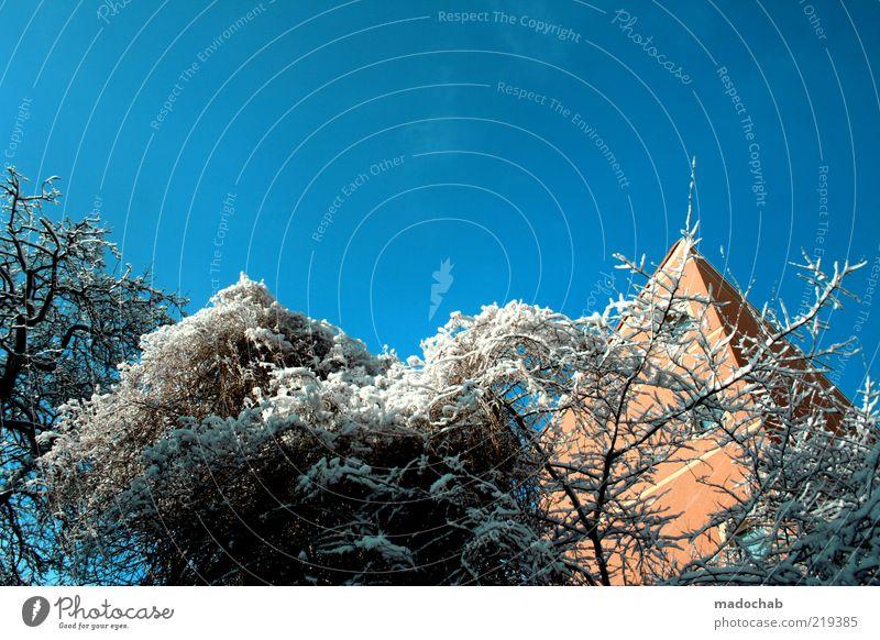 Winter Umwelt Himmel Wolkenloser Himmel Klima Wetter Schönes Wetter Schnee Baum Haus kalt Gefühle Stimmung Farbe Klarheit Minusgrade Temperatur Ast