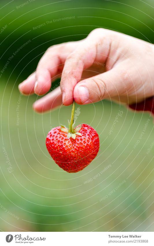 Liebe in deinen Händen Sommer schön grün Hand rot Wärme Ernährung Kindheit frisch Herz Finger Romantik Hoffnung lecker Dessert