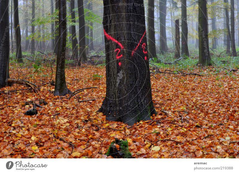 Ratlos im Wald Natur alt Baum Pflanze Blatt dunkel Herbst Holz Regen Landschaft braun Nebel Schilder & Markierungen Zeichen Baumstamm
