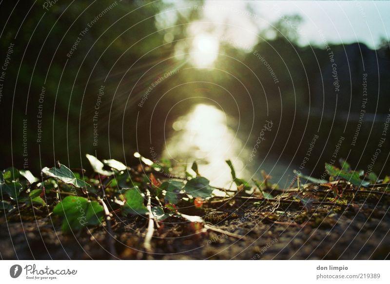 the canal Umwelt Natur Tier Herbst Schönes Wetter Pflanze Efeu Fluss cong river analog Farbfoto Außenaufnahme Abend Reflexion & Spiegelung Sonnenlicht