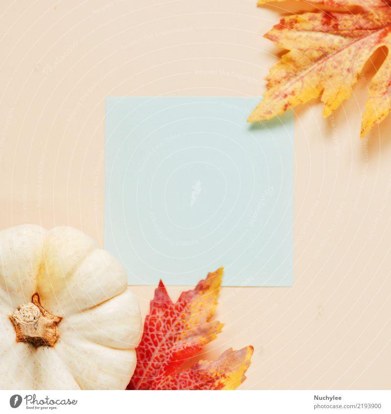 B ? Lank Papier mit Herbstlaub und Kürbis Natur Pflanze Farbe schön Blatt gelb Lifestyle Stil Kunst Mode oben Design Textfreiraum hell retro