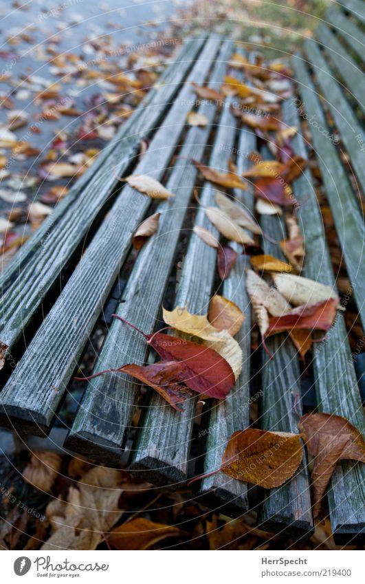 Schon besetzt Blatt gelb Herbst Holz Park braun trist Anschnitt Bildausschnitt Maserung Herbstlaub verwittert herbstlich Parkbank Holzbank Herbstwetter