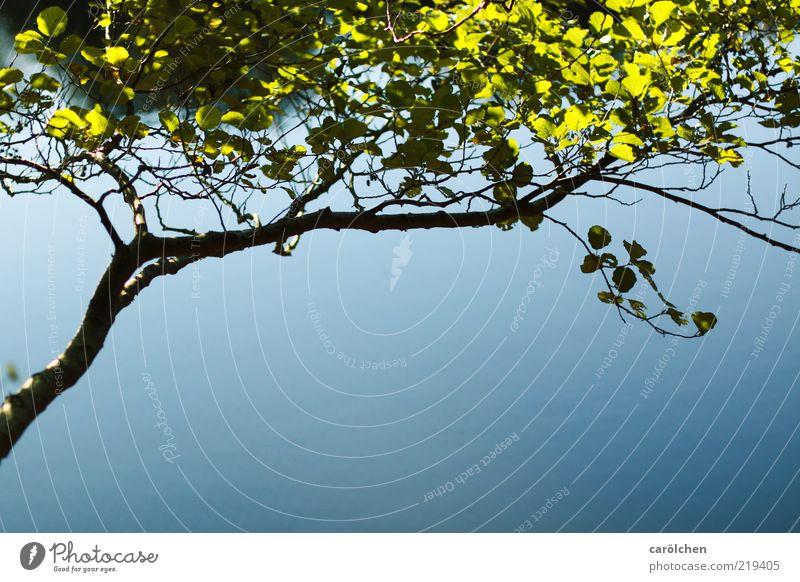 Blattwerk Natur Schönes Wetter Baum blau grün schwarz Ast einfach elegant reduziert Seeufer filigran Buche Farbfoto Detailaufnahme Menschenleer