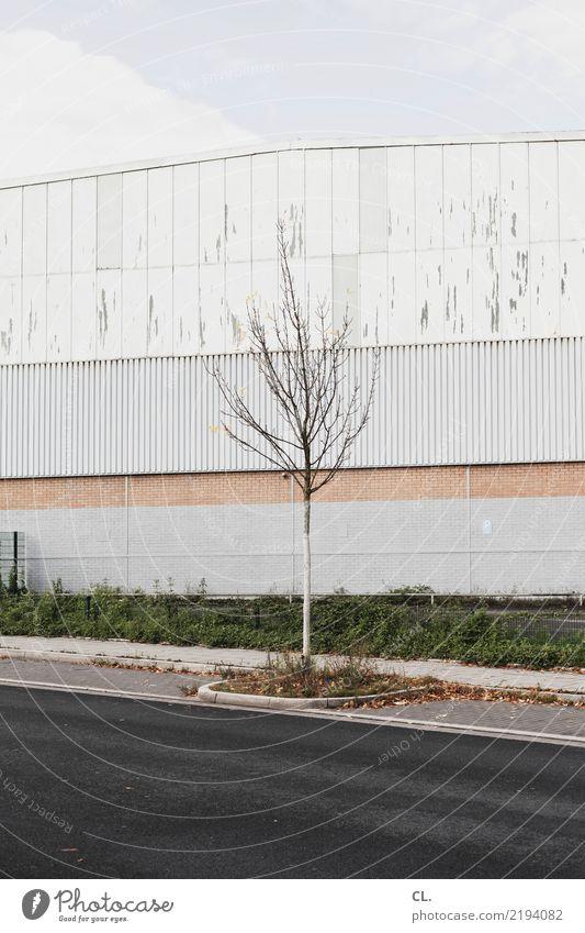 stille straßen Himmel Herbst Baum Stadtrand Industrieanlage Fabrik Gebäude Architektur Mauer Wand Verkehr Verkehrswege Straße Wege & Pfade trist Farbfoto