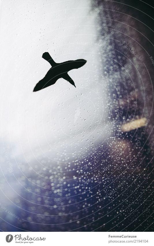 Flying high Natur Tier Fenster Vogel Regen Wassertropfen Schutz Fensterscheibe Warnhinweis Etikett Glasscheibe Blauton