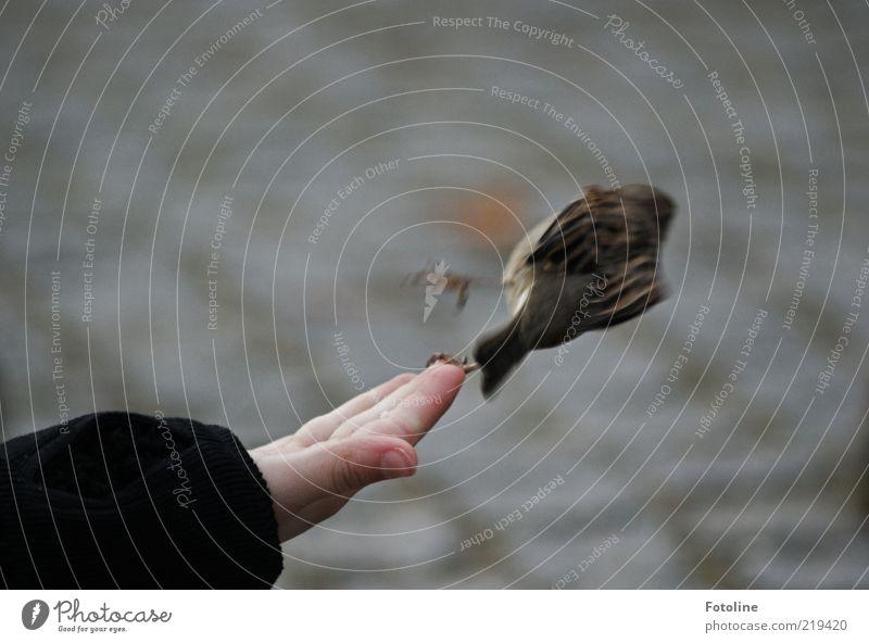 Kurve kratzen Mensch Kind Haut Arme Hand Finger Umwelt Natur Tier Park Wildtier Vogel Krallen fliegen füttern klein listig natürlich Flucht berühren Naturliebe