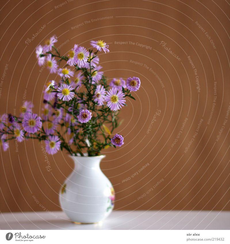 Für Mami Pflanze Blume Blatt Blüte Blumenstrauß Vase Blumenvase Porzellan Keramik Blühend Duft verblüht schön Kitsch braun grün violett rosa weiß Muttertag