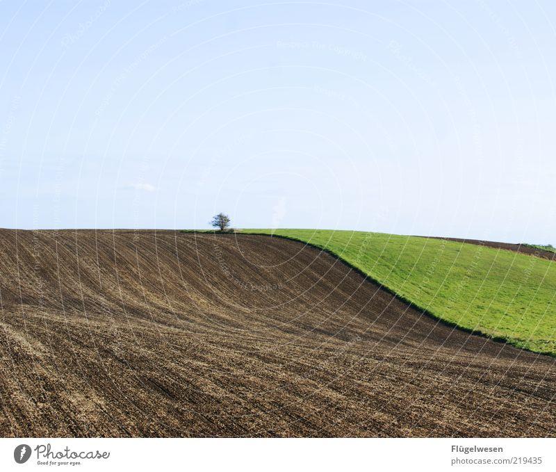 abgegrast Umwelt Natur Landschaft Klima Klimawandel Baum Wiese Feld natürlich Weide Himmel Freiheit Hügel Farbfoto Außenaufnahme Tag Brachland Blauer Himmel