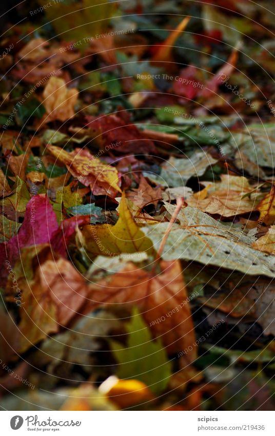 Herbstlaub Natur Klimawandel Wetter Blatt Wege & Pfade alt Farbfoto mehrfarbig Außenaufnahme Nahaufnahme Detailaufnahme Menschenleer Tag Licht Kontrast
