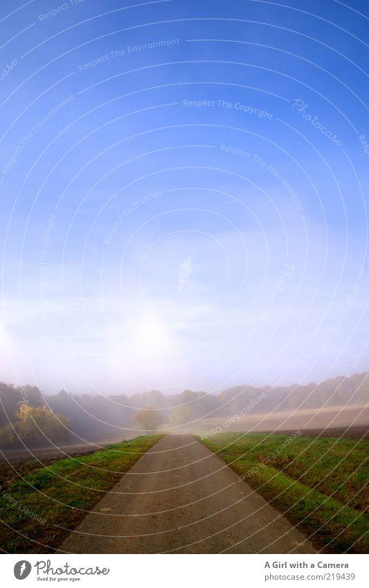 langsam wird es freundlicher! Umwelt Natur Pflanze Himmel Wolkenloser Himmel Horizont Herbst Schönes Wetter Nebel Feld frisch natürlich blau mehrfarbig grau