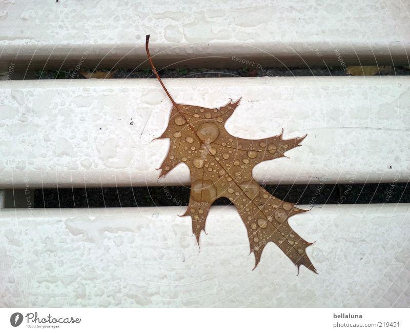 Ein ganz besonderes Blatt Umwelt Natur Wassertropfen Klima Wetter schlechtes Wetter Regen nass braun weiß Bank Parkbank Eiche Eichenblatt Farbfoto