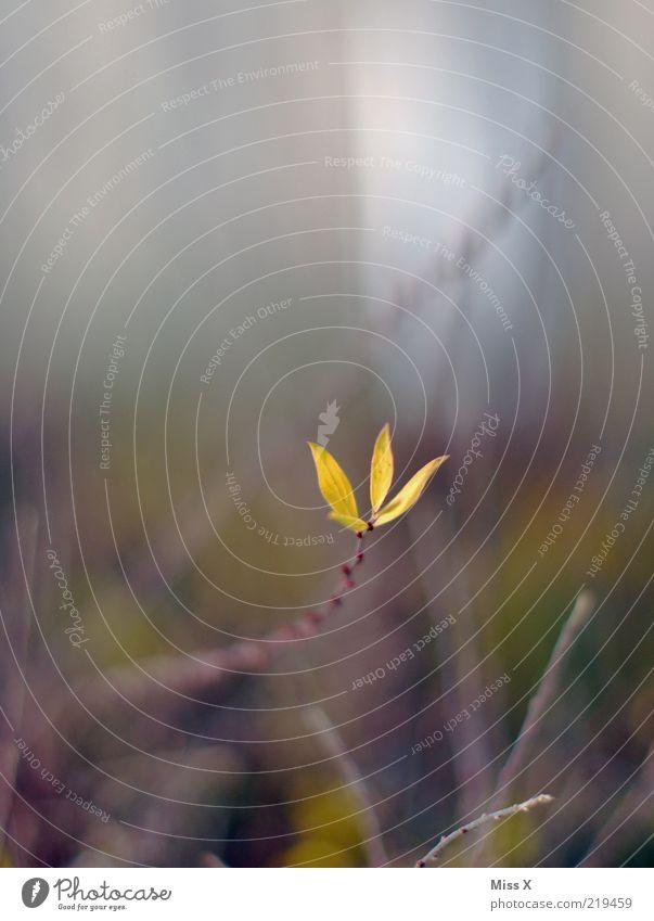 kleiner Trieb Natur Frühling Pflanze Sträucher Blatt Blühend Wachstum Ast Farbfoto Außenaufnahme Nahaufnahme Menschenleer Schwache Tiefenschärfe Unschärfe