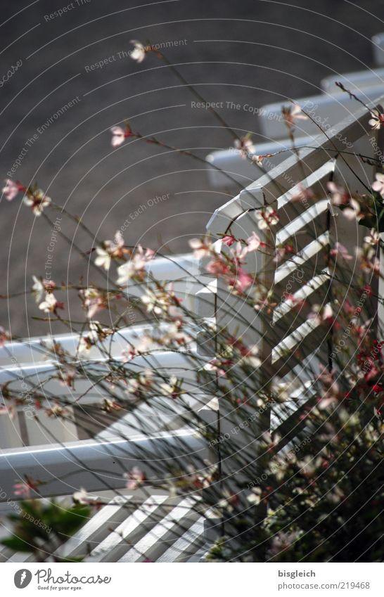 Das Ende der Saison VI Herbst Blume Gras Bank weiß ruhig Frieden Saisonende Farbfoto Gedeckte Farben Außenaufnahme Tag Holzbank Bildausschnitt Anschnitt