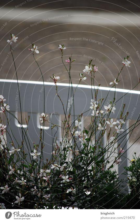 Das Ende der Saison VII weiß Blume ruhig Blüte Gras warten rosa Bank Vergänglichkeit Gelassenheit Blühend geduldig Holzbank Saisonende