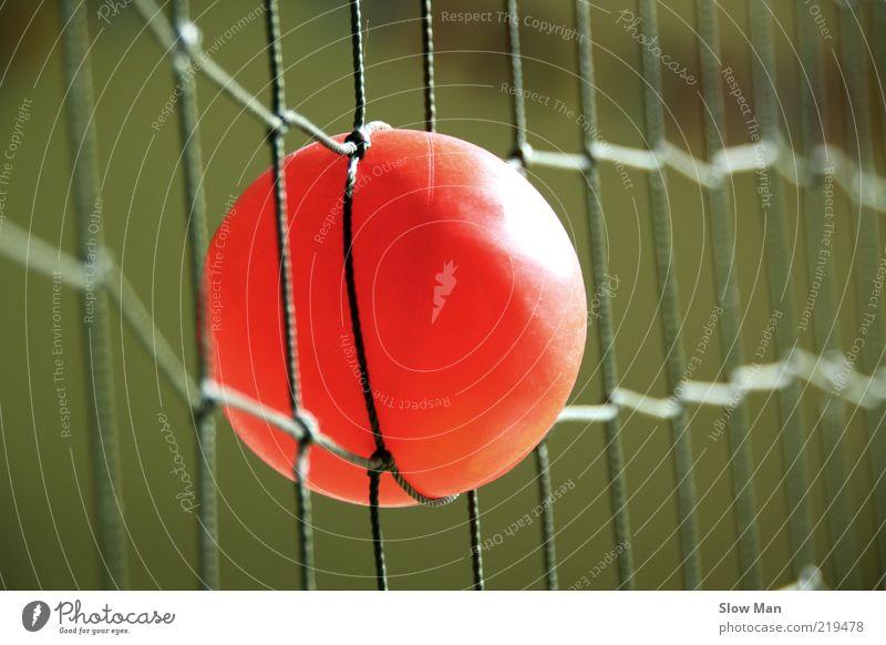 Gefangen im Netz Freizeit & Hobby Ballsport Kugel listig gefährlich Verbote Netzwerk Tennisnetz netzartig orange rot Fangnetz Schlaufe Niederlage Missgeschick