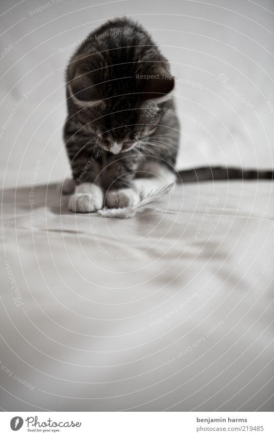 wo ist der rest?! Haustier Katze 1 Tier Enttäuschung Schwarzweißfoto Innenaufnahme Tierporträt Hauskatze Katzenbaby Tierjunges niedlich Blick nach unten