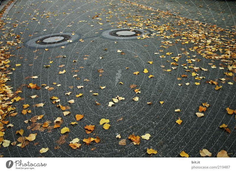 AUGEN AUF - im Straßenverkehr Blatt schwarz gelb Herbst dunkel Umwelt grau gold leuchten rund Asphalt unten Verkehrswege Doppelbelichtung Herbstlaub