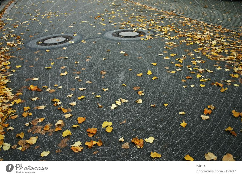 AUGEN AUF - im Straßenverkehr Umwelt Herbst Blatt Verkehrswege dehydrieren dunkel unten gelb gold grau schwarz Kanalisation Gully herbstlich Tiefbau Abfluss