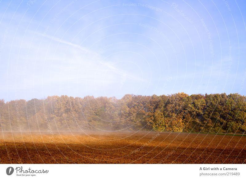 rising mist Natur Himmel Baum grün blau Pflanze gelb Wald Herbst Landschaft Luft braun Feld Nebel Wetter Umwelt