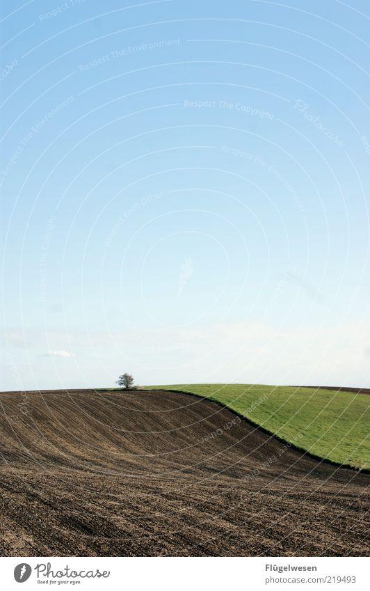 Himmel Baum Erde Wiese Ferne Freiheit Umwelt Natur Landschaft Pflanze Urelemente Wolkenloser Himmel Klima Wetter Feld natürlich friedlich Einsamkeit Farbfoto