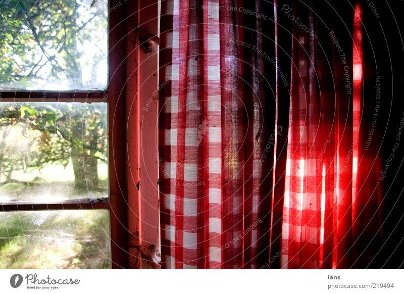 Ausblick alt rot Fenster dreckig authentisch Gardine kariert Anschnitt Bildausschnitt Fensterblick Fensterplatz Sprossenfenster