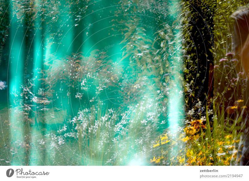 Fenster Glas Fensterscheibe Reflexion & Spiegelung Spiegelbild Vorhang Gardine Ast Baum Blume Blühend Blüte Erholung Ferien & Urlaub & Reisen Garten Gras