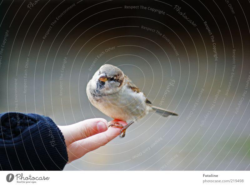 Dicker kleiner Kerl Mensch Kind Natur Hand Tier hell Vogel Haut Arme Umwelt Finger sitzen nah Feder natürlich