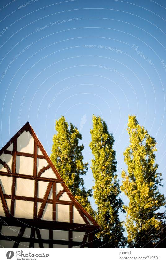 Fachwerk Natur alt weiß grün blau Baum Pflanze Sommer Haus Wand Architektur Mauer Gebäude braun Fassade leuchten
