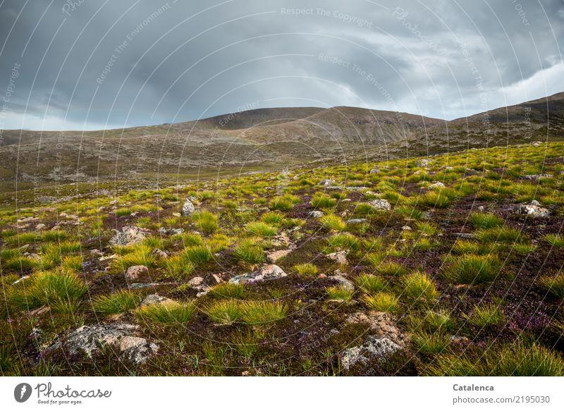 Hochmoor Ausflug Berge u. Gebirge wandern Landschaft Wolken Gewitterwolken Sommer schlechtes Wetter Pflanze Blume Gras Bergheide Hügel Moor Sumpf