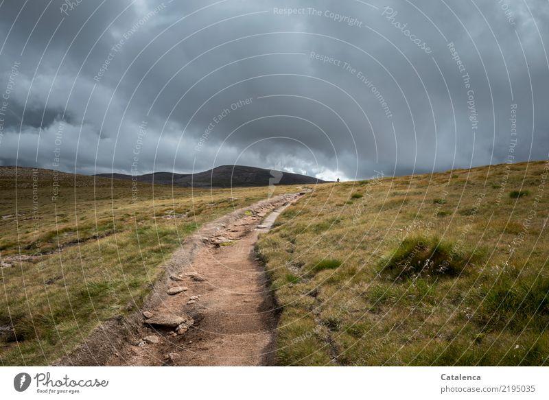 Wege gehen Berge u. Gebirge wandern androgyn 1 Mensch Gewitterwolken Sommer schlechtes Wetter Gras Highlands Schottland Wege & Pfade Fußweg groß kalt braun grau