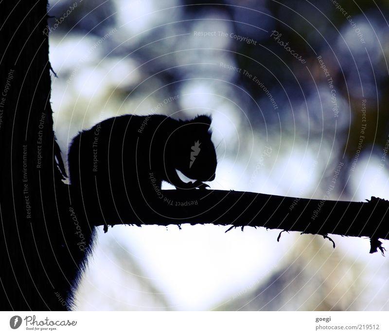 Sandy Cheeks Natur Baum Tier dunkel klein Umwelt sitzen Ast wild natürlich Fell Wildtier niedlich bewegungslos Eichhörnchen