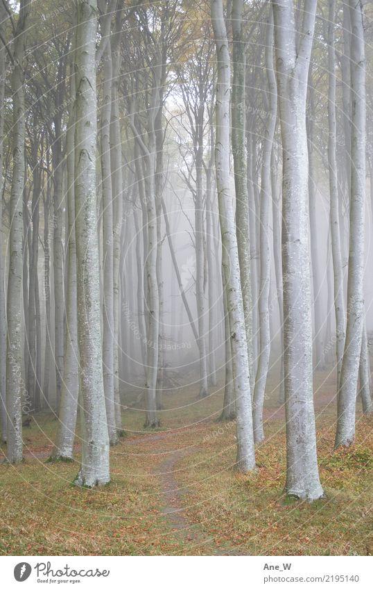 Ein Wald Ferien & Urlaub & Reisen wandern Natur Landschaft Herbst Nebel Baum Blatt Sehenswürdigkeit Wahrzeichen Weg Holz natürlich Originalität schön