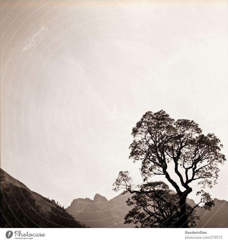 Regards to Mr. Adams... Umwelt Natur Landschaft Himmel Pflanze Baum Hügel Berge u. Gebirge authentisch einfach groß Stimmung Freiheit Schwarzweißfoto