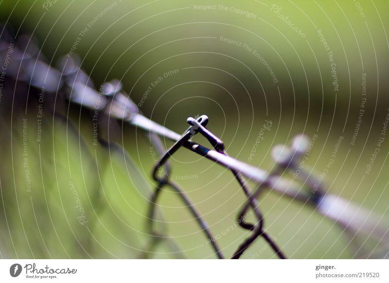 Maschendrahtzaun grün grau Metall Zaun Draht Makroaufnahme Begrenzung Schlaufe