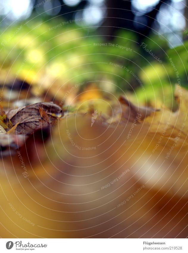 gLAUBe versetzt Berge Umwelt Natur Herbst alt Herbstlaub herbstlich Herbstfärbung Herbstbeginn Blatt Farbfoto Außenaufnahme Tag Unschärfe Waldboden Menschenleer