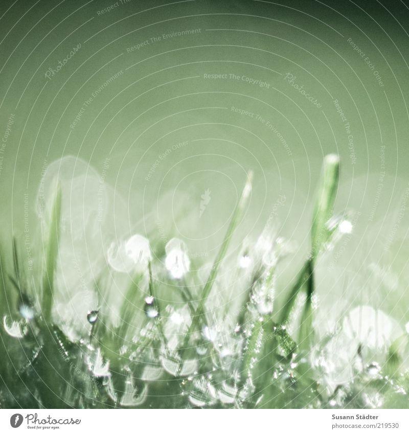 oOIoIoO/oOoOOI Natur Erde Wasser Wassertropfen Pflanze Gras Wiese glänzend Blendenfleck Halm Tau Morgen feucht nass Tropfen Farbfoto Nahaufnahme Detailaufnahme