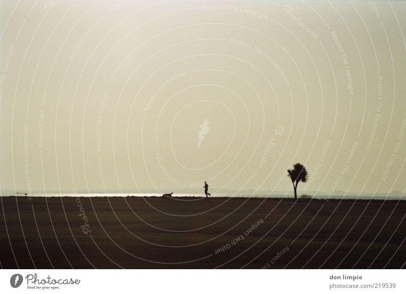 galway bay Mensch Baum Meer Strand ruhig Tier Ferne Leben Bewegung Hund gehen laufen frei Horizont Ausflug Freizeit & Hobby