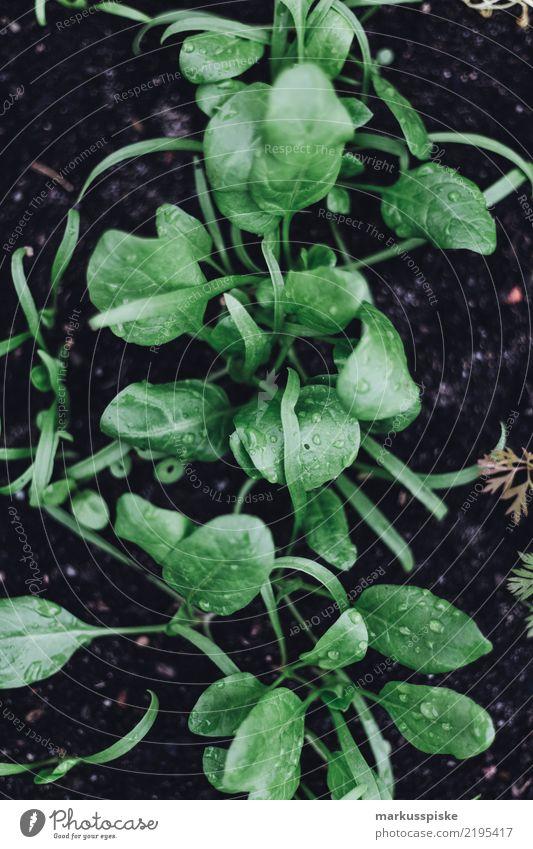 Hochbeet Aufzucht zur Selbstversorgung Lebensmittel Kräuter & Gewürze züchten Pflanze Pflanzenteile Salat Salatblatt Ernährung Bioprodukte