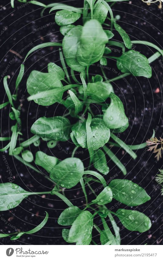 Hochbeet Aufzucht zur Selbstversorgung Pflanze Gesunde Ernährung grün Umwelt Lifestyle Garten Lebensmittel Freizeit & Hobby Wachstum Fitness beobachten