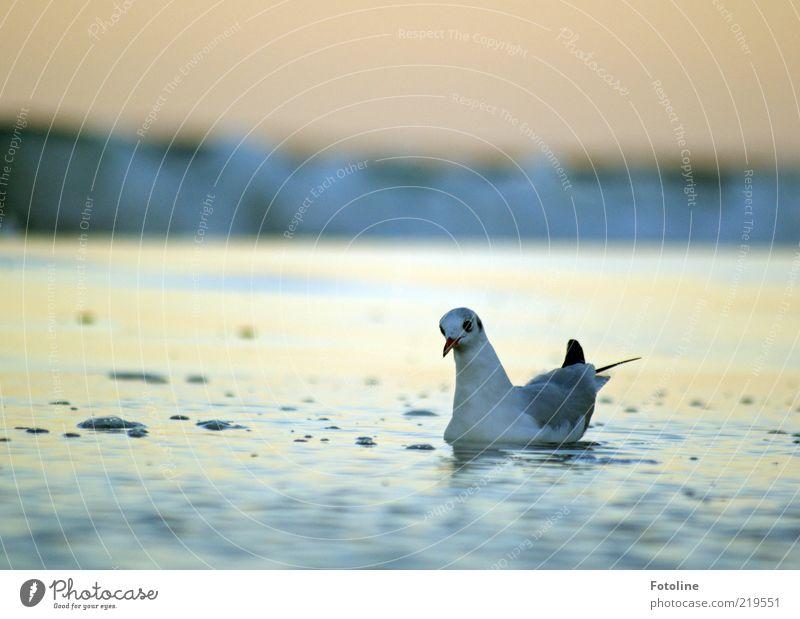 Achtung!!! Welle im Anmarsch! Umwelt Natur Tier Urelemente Wasser Himmel Wellen Küste Ostsee Wildtier Vogel Tiergesicht Flügel nass natürlich Möwe Schnabel