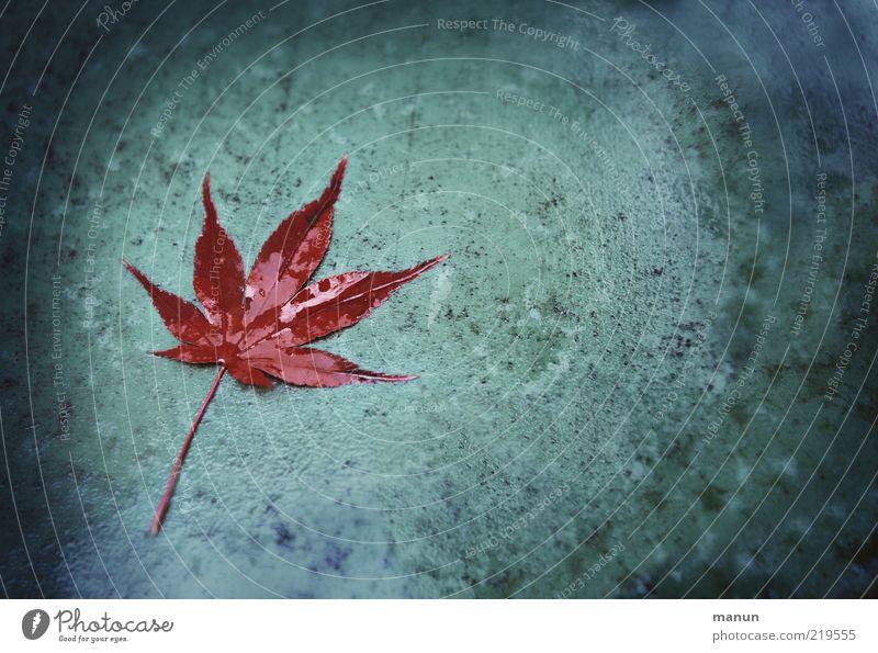 nasskalt Natur dunkel Herbst Regen Wassertropfen Tropfen Wandel & Veränderung liegen Vergänglichkeit Spitze natürlich feucht Originalität
