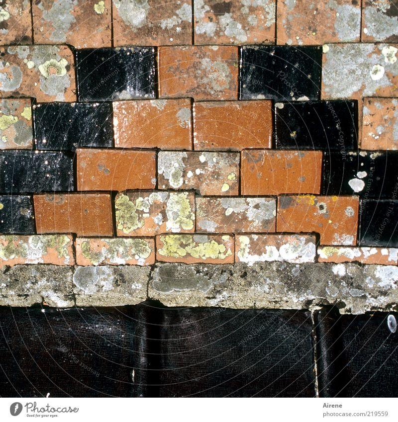 Burgunder Dach rot schwarz grau Architektur authentisch einfach verfallen Backstein Verfall Bauwerk historisch Ornament Bildausschnitt Ton Dachziegel