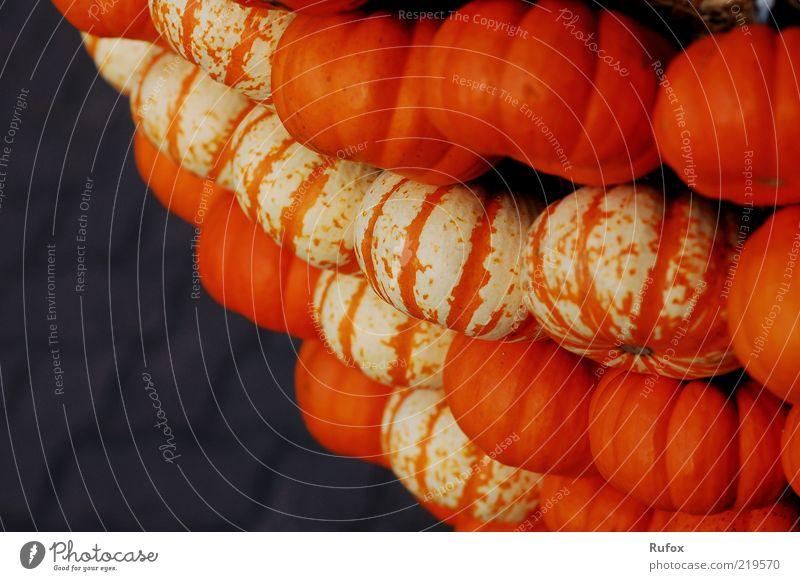 Kürbiswand - Stammbaum der Gruselgesichter Herbst orange Lebensmittel mehrere Gemüse viele Ernte Halloween Bündel Kürbis Textfreiraum links Erntedankfest Kürbiszeit