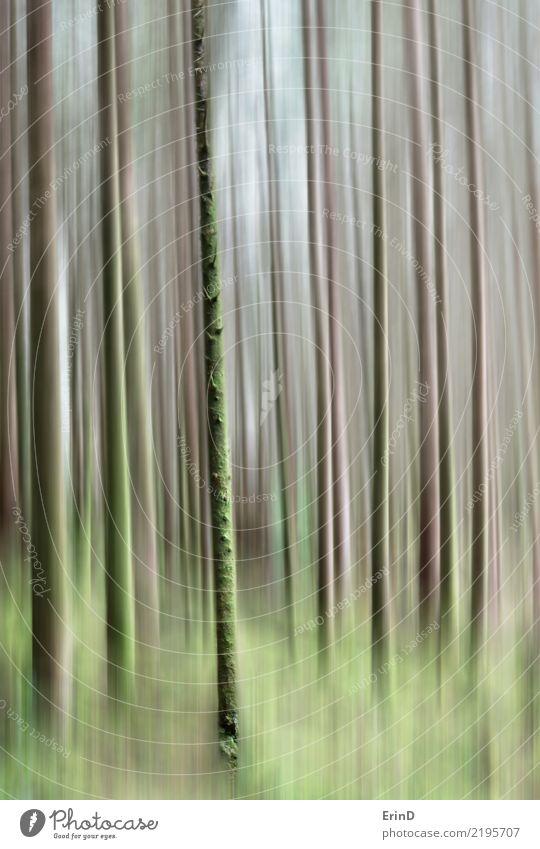 Bäume von Glencoe Natur Ferien & Urlaub & Reisen Farbe schön Baum ruhig Wald natürlich Tourismus Design Zufriedenheit wandern elegant Kreativität Abenteuer